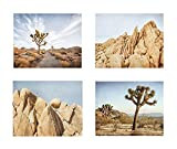 Southwest Wall Art, Joshua Tree Photography, California Desert Pictures, Palm Springs Decor, Set of 4 8x10 Matted Photographic Prints 'Joshua Tree'