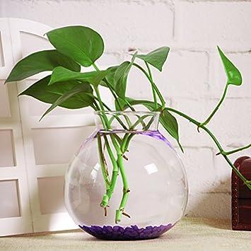 15cm Jarrones Florero Plantador para Flor Terrario Pecera Botella de Vidrio Claro Decoración: Amazon.es: Hogar