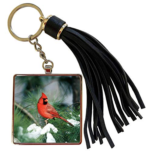 3dRose Danita Delimont - Cardinal - Northern Cardinal male in Pine tree in winter Marion County, Illinois - Tassel Key Chain (tkc_250946_1)