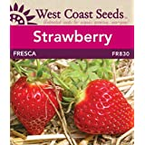 Strawberry Seeds - Fresca (approx. 40 seeds)