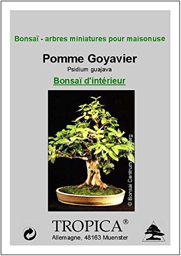 Tropica - Bonsai - Apfelguave (Psidium guajava) - 100 Samen: Amazon ...
