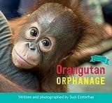 Orangutan Orphanage (Wildlife Rescue)