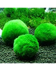 Green Algae Ball 3-4cm Ornamental Real Aquatic Plants Live Fish Tank Aquarium Landscaping Decoration Small Seaweed Ball