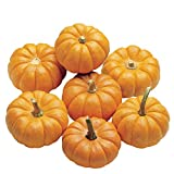 buy Burpee Jack Be Little Pumpkin Seeds 50 seeds now, new 2020-2019 bestseller, review and Photo, best price $7.69