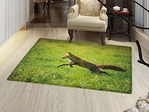 smallbeefly Fox Bath Mats for bathroom Red Fox Jumping Running in Fresh Green Grass Daytime Nimble Clever Ferocious Canine Door Mats for inside Non Slip Backing Green Brown