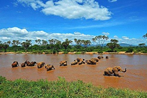 (Hills Elephants Kenya River Greens Animal Poster Fabric Silk Poster Print 80802 )