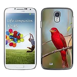 FlareStar Colour Printing Red Spring Songbird Nature Branch cáscara Funda Case Caso de plástico para SAMSUNG Galaxy S4 IV / i9500 / i9515 / i9505G / SGH-i337