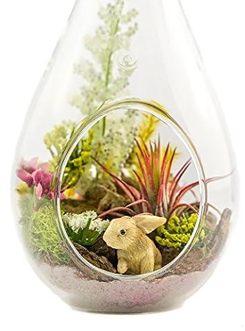 "Air Plant Terrarium Kit   Nature Series   Bunny Hideaway   7"" Teardrop/Pear Glass Shaped Terrarium   Nautical Crush Trading TM (Live Air Plant)"