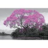 GB Eye Ltd, Tree, Blossom, Maxi Poster