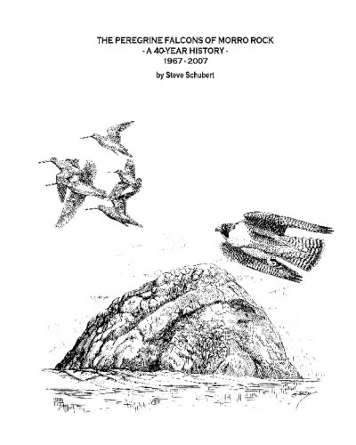 The Peregrine Falcons Of Morro Rock: A 40-Year History - 1967-2007