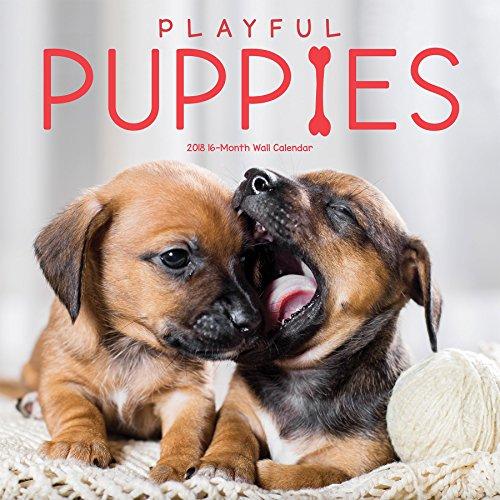 Avalon 2018 Puppies Wall Calendar, 16 Month Calendar, 12 x 12 inches (84438)