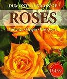 Roses, Rebo, 9036616956