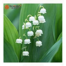100 PCS Lily of the Valley Flower Seeds Bell Orchid Seeds Rich Aroma Bonsai Flower Seed Convallaria majalis