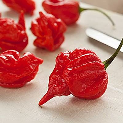 Scorpion Butch T Hot Pepper Garden Seeds - Non-GMO, Heirloom Vegetable Gardening Seed