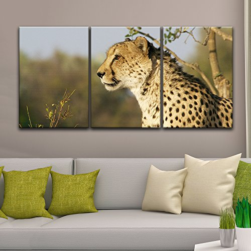 3 Panel A Leopard Staring at Far Away Gallery x 3 Panels