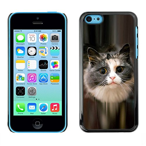 TopCaseStore / caoutchouc Hard Case Housse de protection la Peau - Cute Cat Feline Pet Furry Grey Longhair - Apple iPhone 5C
