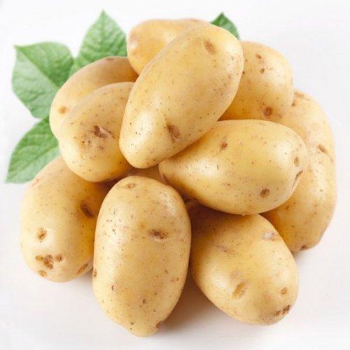 100 Potato Seeds 3 Species Vegetable Natural Nutritious Product Delicious Garden