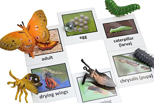 Montessori Butterfly Life Cycle Animal Match Cards and Figurines. Nomenclature Science Work