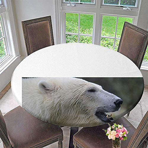 (Mikihome Round Table Tablecloth A Polar Bear with White Fur for Wedding Restaurant Party 35.5