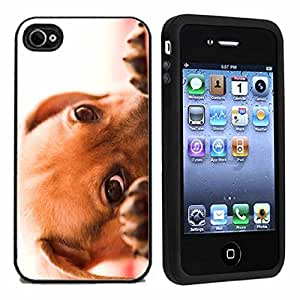 Puppy Peek A Boo Case / Cover For Apple iPhone 4 or 4s by Atomic Market