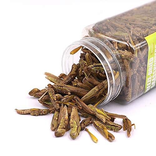 Sequoia Tasty Freeze Dried Grasshopper Reptile Food for Turtles,Bearded Dragon, Lizard,Chickens, Ducks, Wild Birds, Hamsters, Fish, Chameleon and Hedgehogs (3 OZ)