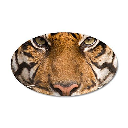 20x12 Oval Wall Vinyl Sticker Sumatran Tiger Face