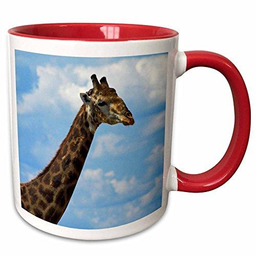 (3dRose Danita Delimont - David Wall - Giraffe - Giraffe Giraffa camelopardalis, Nxai Pan NP, Botswana, Africa - 15oz Two-Tone Red Mug (mug_187901_10))