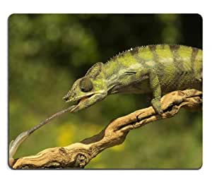 Nature Green Chameleon Bokeh Shot Mouse Pads Customized Made to Order Support Ready 9 7/8 Inch (250mm) X 7 7/8 Inch (200mm) X 1/16 Inch (2mm) High Quality Eco Friendly Cloth with Neoprene Rubber MSD Mouse Pad Desktop Mousepad Laptop Mousepads Comfortable Computer Mouse Mat Cute Gaming Mouse pad by icecream design