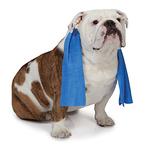 cooling towel for dogs