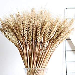 100PCS Dry Grass Bouquet Decoration Wedding Craft Props High Simulation-2 Bunch,Artificial Flower,Stalk,Wheat,Naturally Dried Flowers for Home Party Decorations 3
