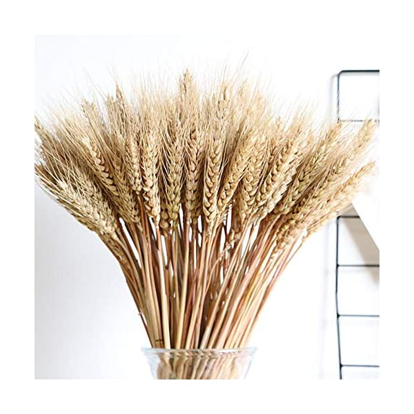 100PCS-Dry-Grass-Bouquet-Decoration-Wedding-Craft-Props-High-Simulation-2-BunchArtificial-FlowerStalkWheatNaturally-Dried-Flowers-for-Home-Party-Decorations