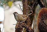 Home Comforts Canvas Print Autumn Garden Foraging Fodder Tree Bird Sparrow Stretched Canvas 10 x 14
