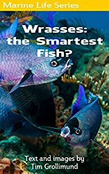 Wrasses: the Smartest Fish?