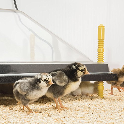 Premier Chick Heating Plate Kit - Includes Cover and Warms Up To 50 Chicks - 16''W x 24''L
