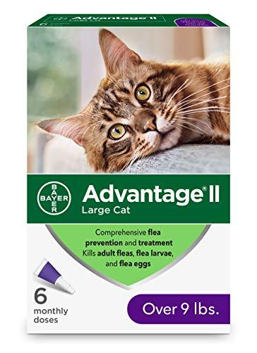 Advantage II 6-Dose Large