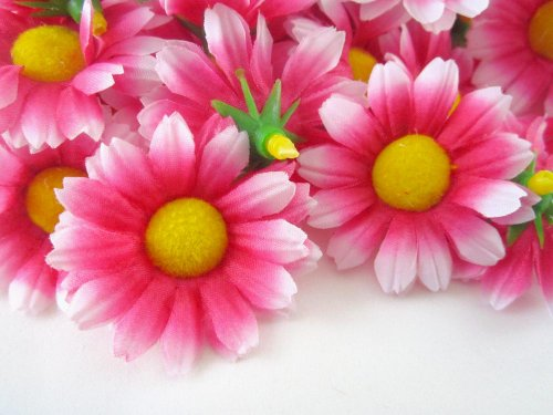 ((24) Silk Hot Pink White edge Gerbera Daisy Flower Heads , Gerber Daisies - 1.75
