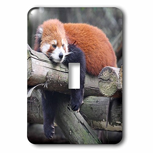 Albom Design Animals - Adorable Red Panda, Sichuan Province, China - Light Switch Covers - single toggle switch (lsp_100288_1) by 3dRose