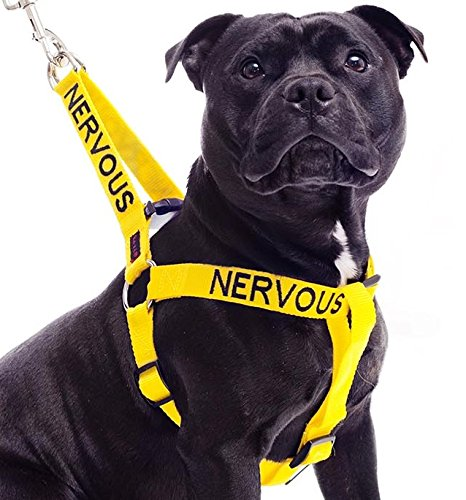 Dexil Limited Nervous Yellow Color Coded Alert Non Pull L XL Dog Harness (Give Me Space) Prevents Accidents by Warning Others of Your Dog in Advance