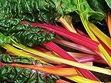 Swiss Chard 'Bright Lights' (Beta Vulgaris L.) Vegetable Plants Seeds, Medium Early Colourful Heirloom