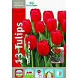 TotalGreen 72405200 Tulip Bulbs