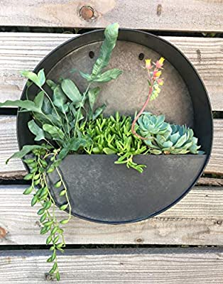Round Hanging Wall Vase Planter for Succulents or Herbs - Beautiful Wall Decor for Air Plants, Faux Plants, Cacti and More, Dark Zinc Color - in Gift Box