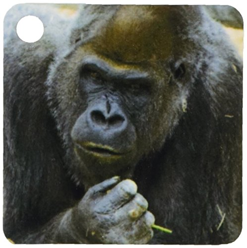 Gorilla Keychain - 3dRose Gorilla strikes pensive pose - NA02 TDR0005 - Trish Drury - Key Chains, 2.25 x 4.5 inches, set of 2 (kc_84723_1)