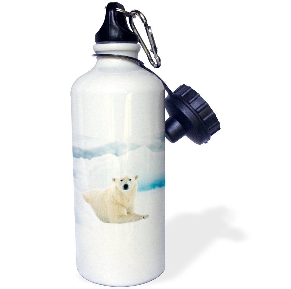3dRose wb/_205318/_1 Polar bear in Norway laying on the summer pack ice Sports Water Bottle 21oz Multicolored