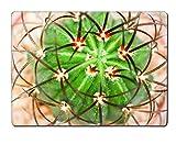 Luxlady Natural Rubber Placemat IMAGE ID: 24171703 Cactus Melocactus diersianus