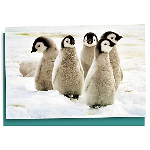 Tree-Free Greetings EcoNotes 12 Count Emperor Penguin Chicks All Occasion Notecard Set with Envelopes, 4 x 6 Inches (Tree Free Note Card)