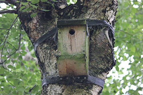 Home Comforts LAMINATED POSTER Bird Box In A Tree Animals Po