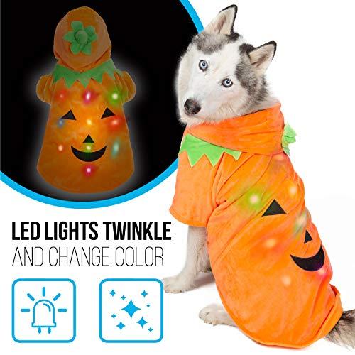 Dog Halloween Costumes On Clearance (K9 Casuals Jack-o-Lantern Pumpkin Dog Costume | Halloween Dog Sweater with Blinking Lights | Light-up Medium Dog Costume for Medium Dogs (and Small, Large Dogs) | Halloween Dog Costume |)