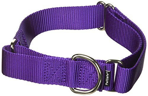Purple Dog Dog Collar - PetSafe Martingale Collar 1