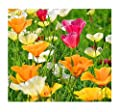California Dreaming Mixed Poppy Seeds - .3 Oz.- Approximately 5,000 Seeds