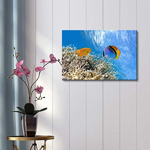 Tropical Fish on Coral Reef in The Red Sea Wall Decor ation